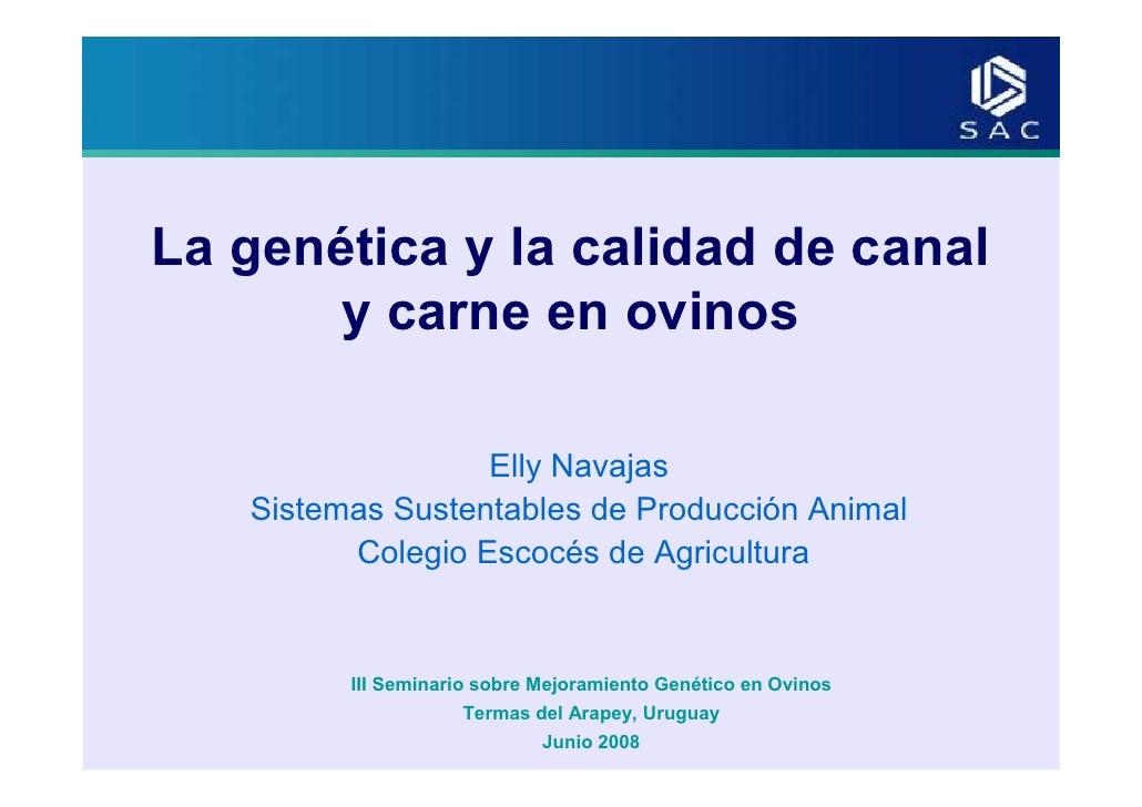 Navajas elly   la genética y la calidad de canal y carne en ovinos