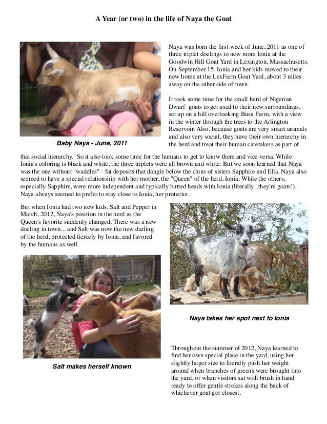 A Year (or Two) in the Life of Naya the Goat