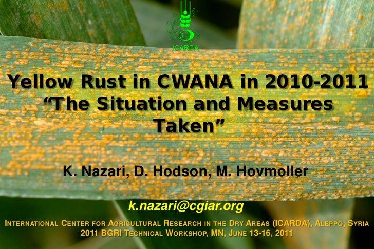 Nazari yellow rust
