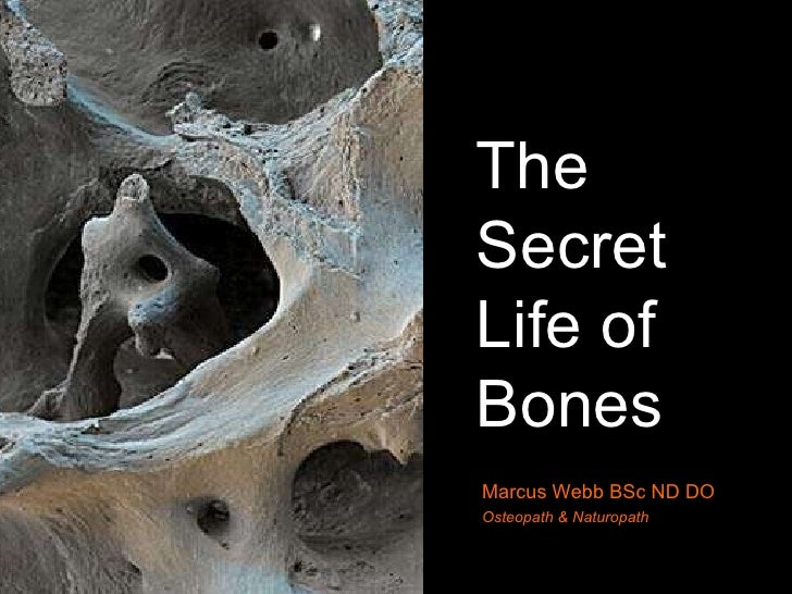 The Secret Life of Bones Marcus Webb BSc ND DO Osteopath & Naturopath