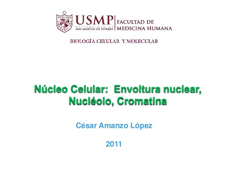 Núcleo celular amanzo_2011-abreviado