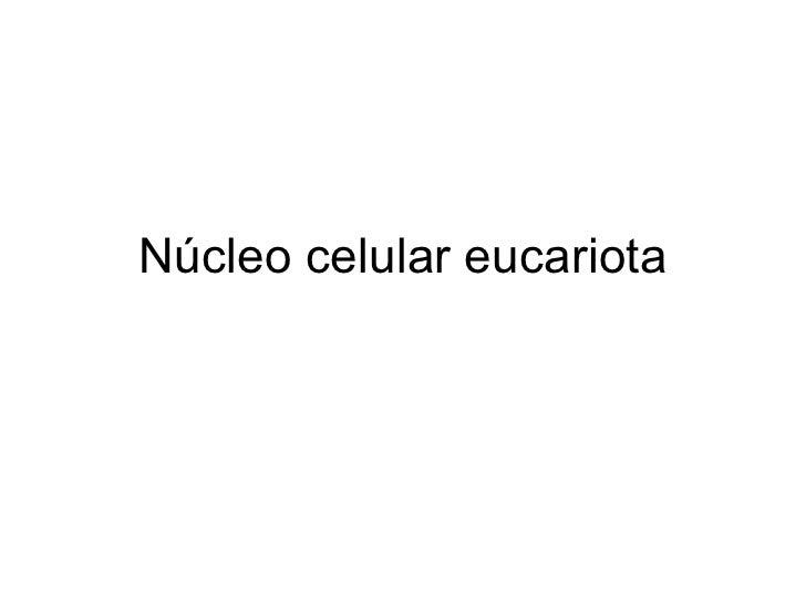 Núcleo celular eucariota