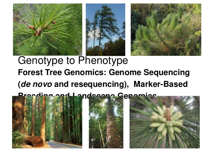 Genotype to Phenotype<br />Forest Tree Genomics: Genome Sequencing (de novo and resequencing),  Marker-Based Breeding and ...
