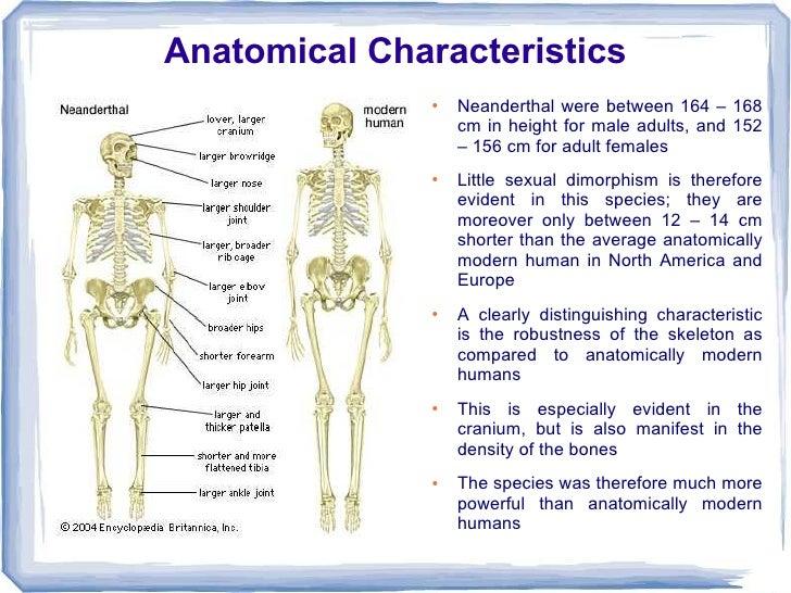 bones in adults