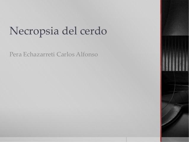Necropsia del cerdo Pera Echazarreti Carlos Alfonso