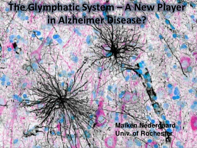 The Glymphatic System – A New Player  in Alzheimer Disease?
