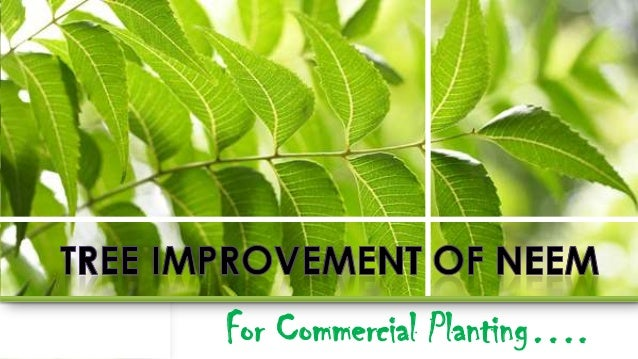 For Commercial Planting….