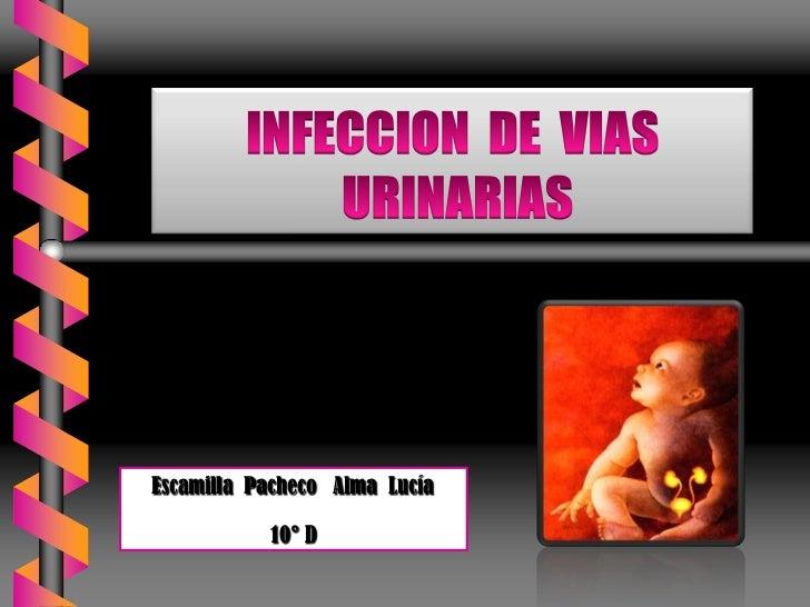 INFECCION  DE  VIAS URINARIAS<br />Escamilla  Pacheco   Alma  Lucía<br />10° D  <br />