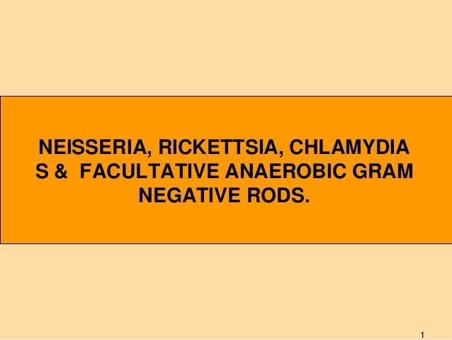 neisseria, rickettsia, chlamydias