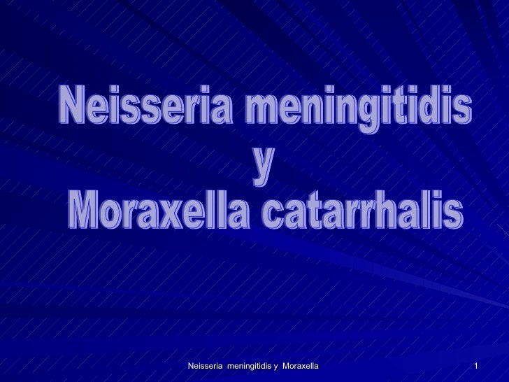Neisseria meningitidis y  Moraxella catarrhalis