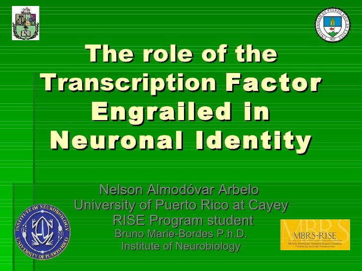 The role of the Transcription  Factor Engrailed in Neuronal Identity Nelson Almodóvar Arbelo  University of Puerto Rico at...