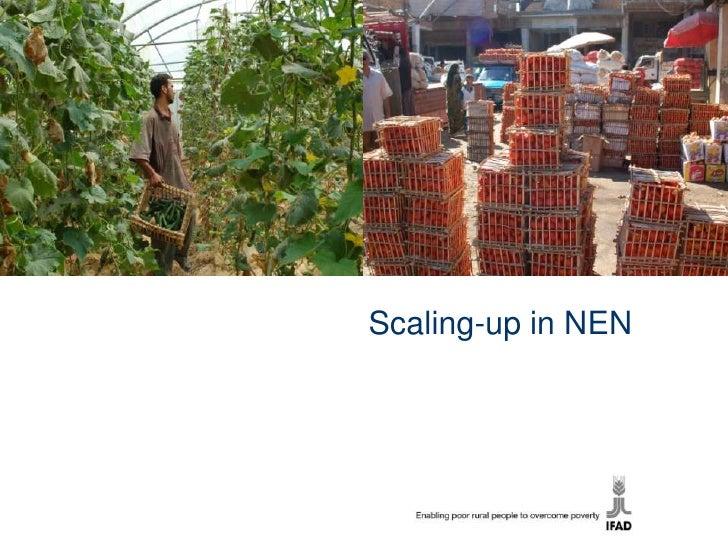 Nen scaling up ex