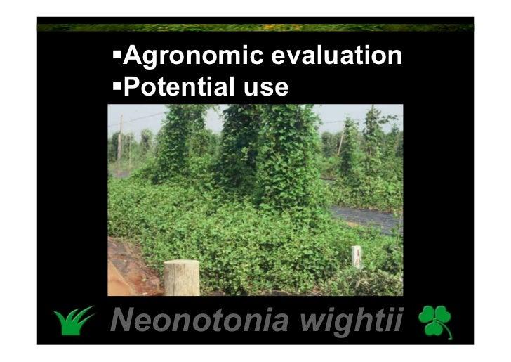 Agronomic evaluation Potential use     Neonotonia wightii