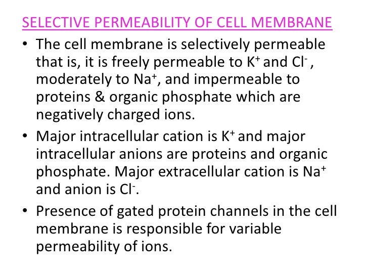 effect of organic solvents on cell membrane permeability The method of conditioning the membrane has a major effect on solvent flux, membrane  of the membrane work to date with organic solvents  membrane permeability .