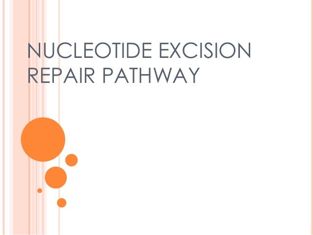 NUCLEOTIDE EXCISION REPAIR PATHWAY
