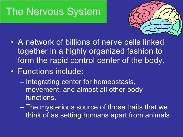 The Nervous System <ul><li>A network of billions of nerve cells linked together in a highly organized fashion to form the ...