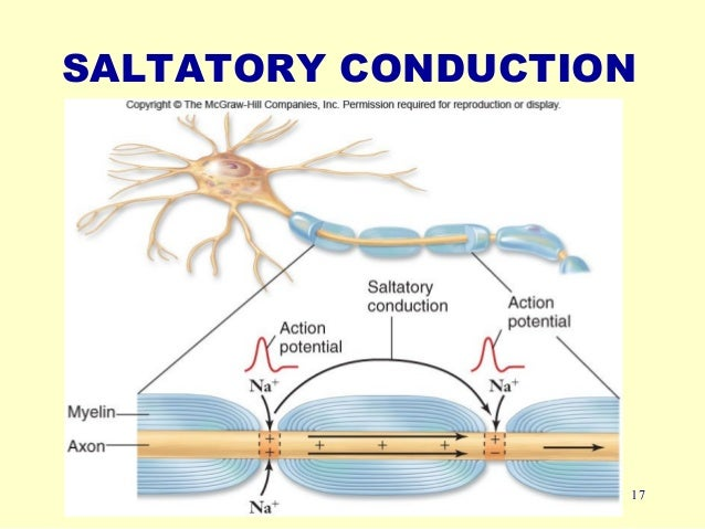 Nervous Impulse - Nervous Impulse