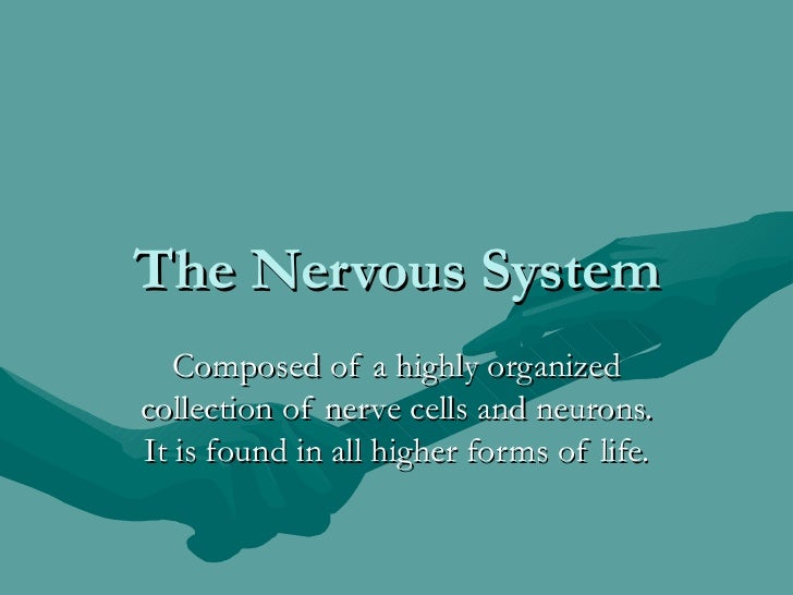 The Nervous System   Composed of a highly organizedcollection of nerve cells and neurons.It is found in all higher forms o...