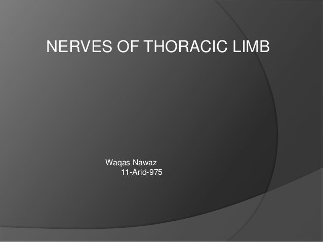 Nerves of thoracic limb