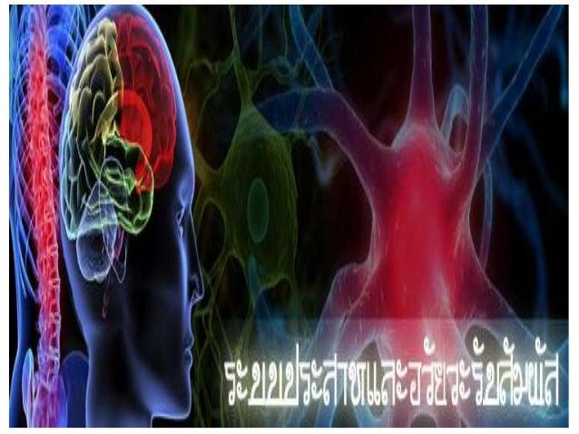Nerve system 5.5
