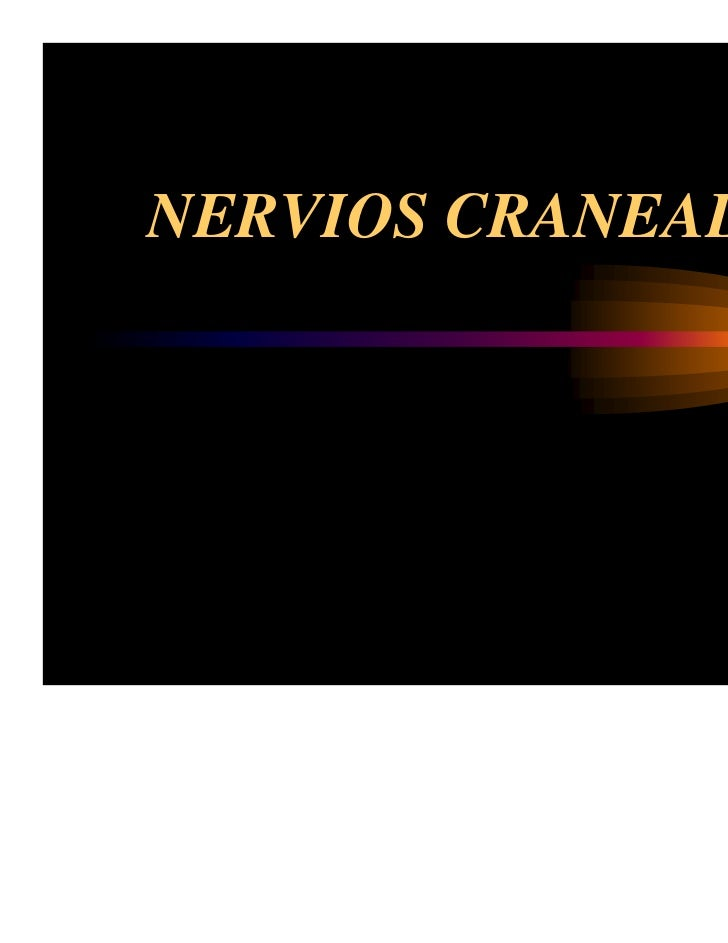 Anatomia nervios craneales for 12 paredes craneales