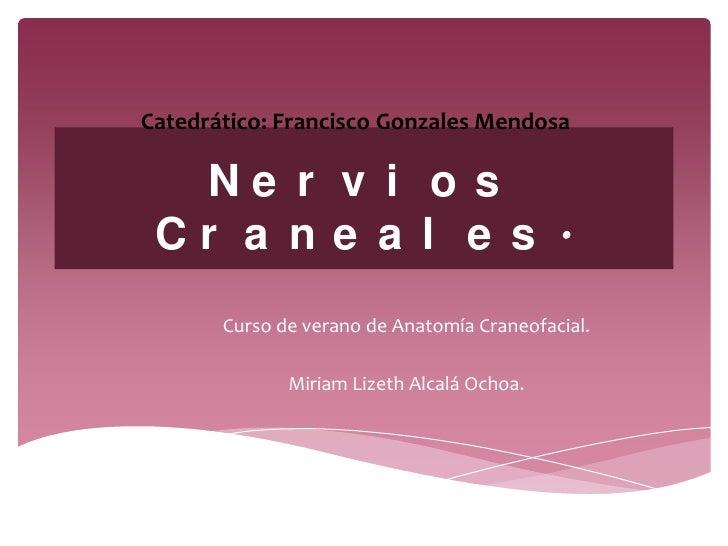 Catedrático: Francisco Gonzales Mendosa  Ne r v i o s Cr a n e a l e s .       Curso de verano de Anatomía Craneofacial.  ...