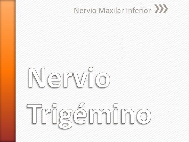 Nervio Maxilar Inferior