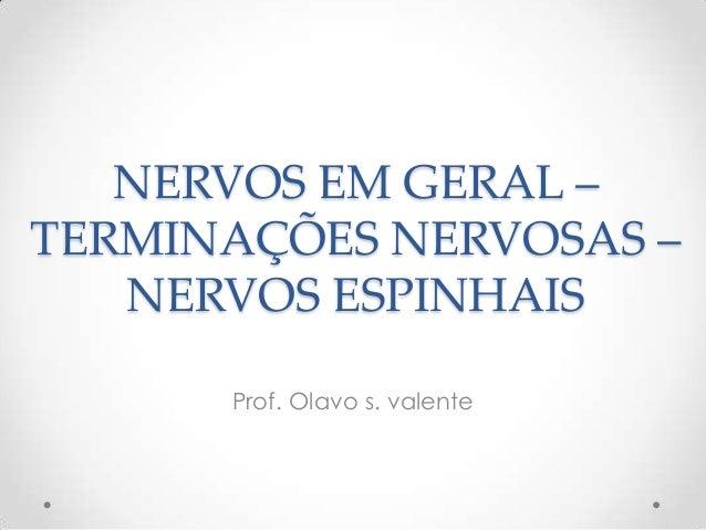 Prof. Olavo s. valente NERVOS EM GERAL – TERMINAÇÕES NERVOSAS – NERVOS ESPINHAIS