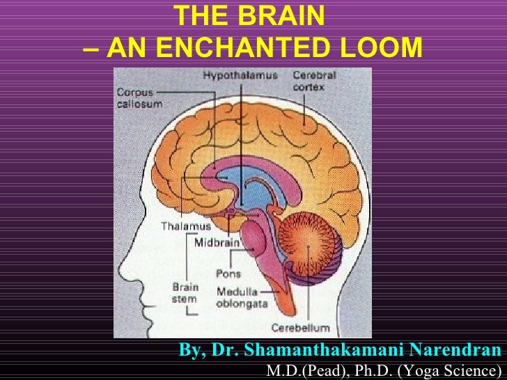 THE BRAIN  – AN ENCHANTED LOOM By, Dr. Shamanthakamani Narendran   M.D.(Pead), Ph.D. (Yoga Science)