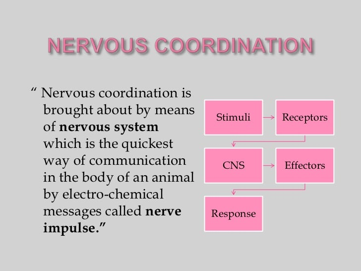 """ Nervous coordination is  brought about by means     Stimuli    Receptors  of nervous system  which is the quickest  way ..."