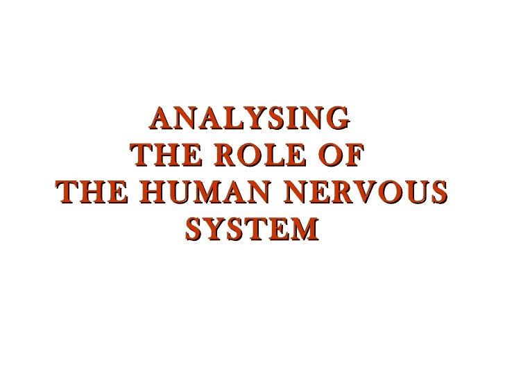 ANALYSING  THE ROLE OF  THE HUMAN NERVOUS SYSTEM