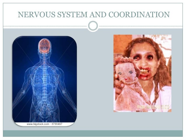 NERVOUS SYSTEM AND COORDINATION
