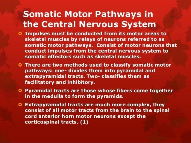 Nervous system artfact
