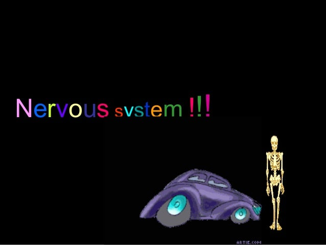 NERVOUS SYSTEMNervous system !!!