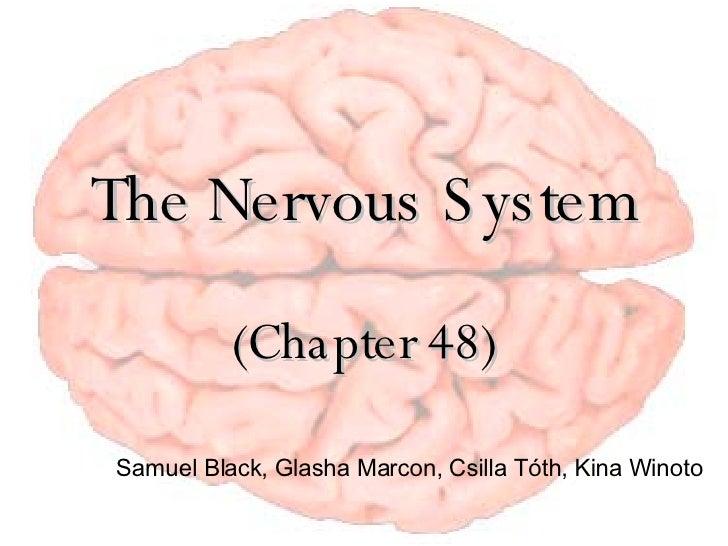 Nervoussystempresentation 1193558738696238 3