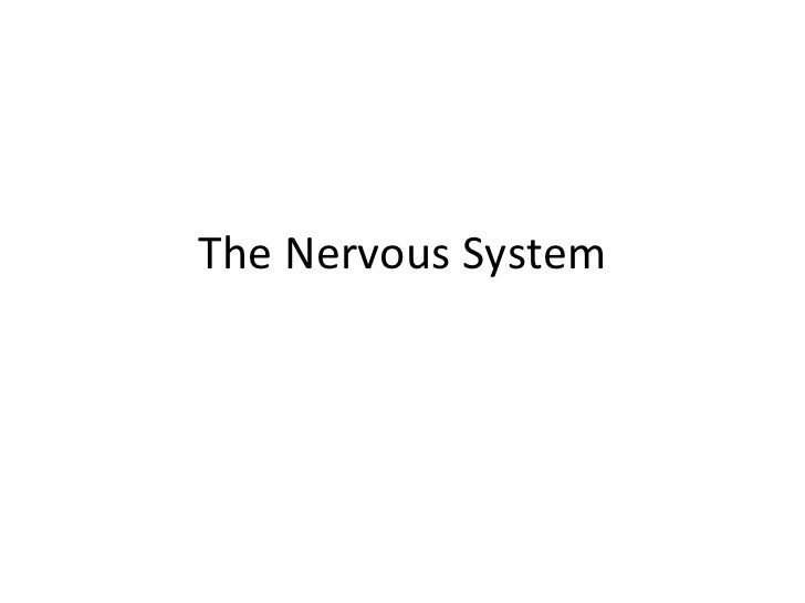 5/10 Nervous system revised