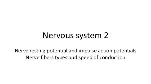 Nervous system 2 Nerve resting potential and impulse action potentials Nerve fibers types and speed of conduction