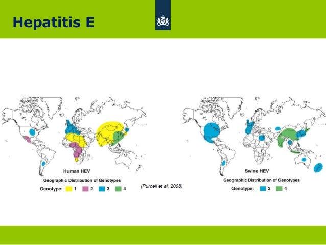 hepatitis b verklaring