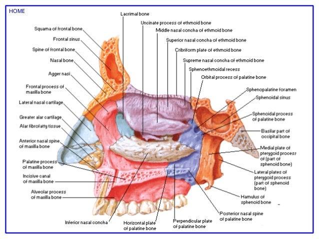 Similiar Netters Anatomy Keywords