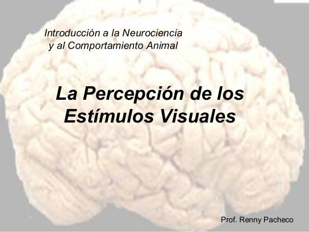 Introducción a la Neurociencia y al Comportamiento Animal  La Percepción de los Estímulos Visuales  Prof. Renny Pacheco
