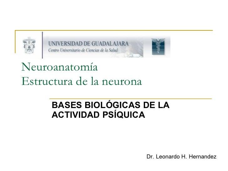 Neuroanatomía Estructura de la neurona BASES BIOLÓGICAS DE LA ACTIVIDAD PSÍQUICA Dr. Leonardo H. Hernandez