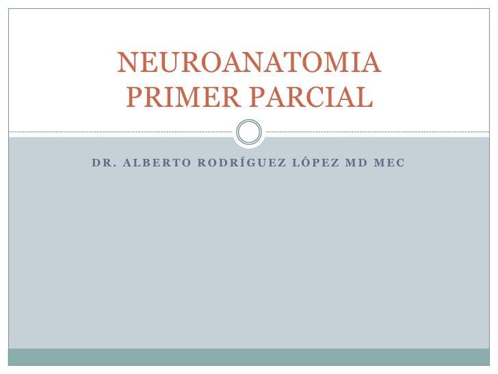 Neuroanatomia apuntes