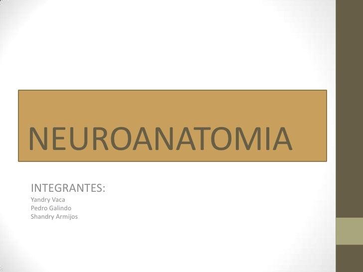 Neuroanatomia caso clinico