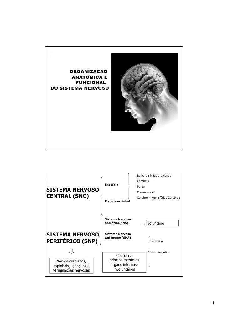 ORGANIZACAO        ANATOMICA E         FUNCIONAL DO SISTEMA NERVOSO                                            Bulbo ou Me...