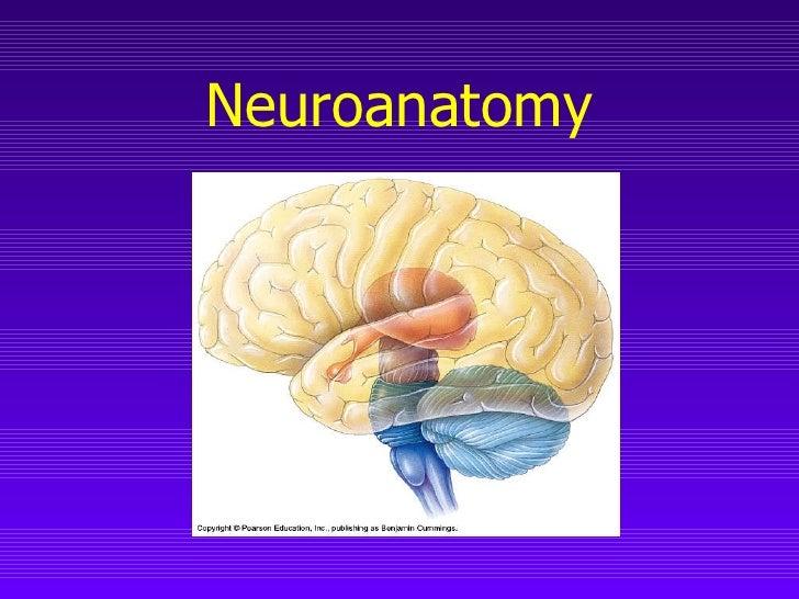 Neuroanatomy (Chapter 7)