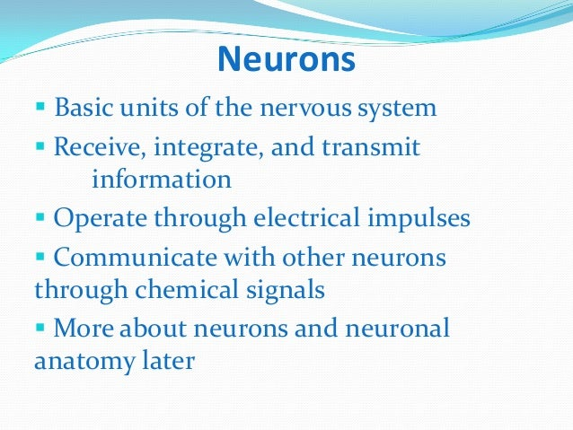 Three Types of Neurons Three Main Types of Neurons