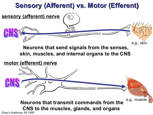 How Motor Units Work recommendations