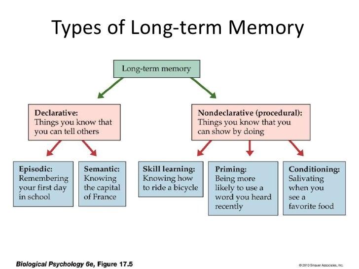 Define long term memory