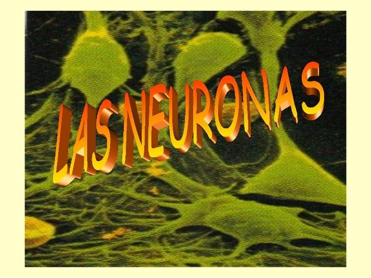 • NEURONAS SON LA UNIDAD  ESTRUCTURAL Y FUNCIONAL DEL  SISTEMA NERVIOSO,  ESPECIALIZADAS EN RECIBIR,  CONDUCIR Y TRANSMITI...