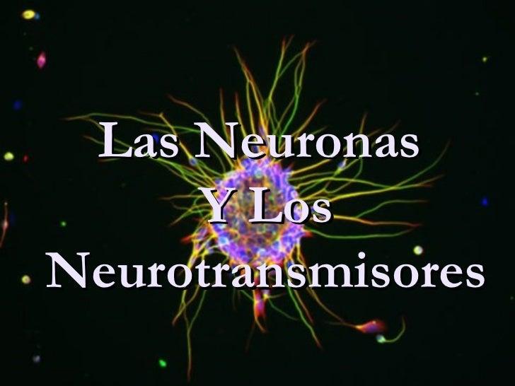 Las Neuronas      Y Los Neurotransmisores